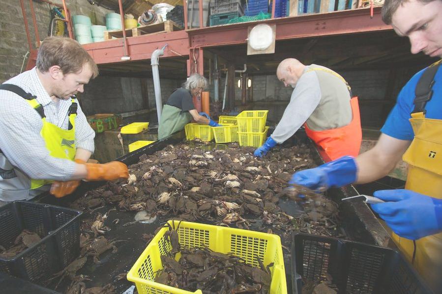 Orkney Shellfish Research Project | FARNET
