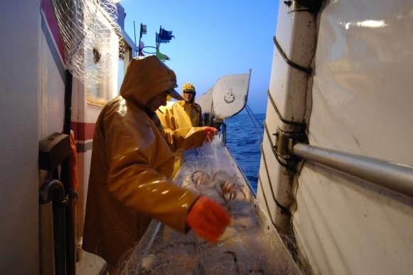 fr214-sole-fishery