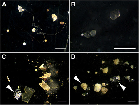 Microplastics in sediments from the rivers Elbe (A), Mosel (B), Neckar (C), and Rhine (D). Note the diverse shapes (filaments, fragments, and spheres) and that not all items are microplastics (e.g., aluminum foil (C) and glass spheres and sand (D), white arrowheads). The white bars represent 1 mm.Martin Wagner et al. - Wagner et al.: Microplastics in freshwater ecosystems: what we know and what we need to know. In: Environmental Sciences Europe. 26, 2014, doi:10.1186/s12302-014-0012-7